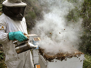 Orange County beekeeping services