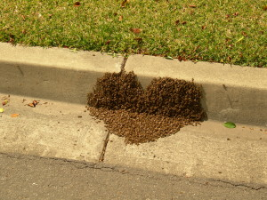 Los Alamitos Bee Removal