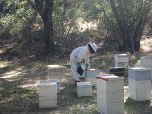 Cerritos Bee Removal