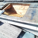 Southern California bee control structural removal