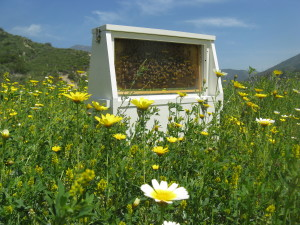beekeeping bee removal garden grove