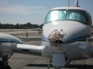 San Juan Capistrano Bee Removal