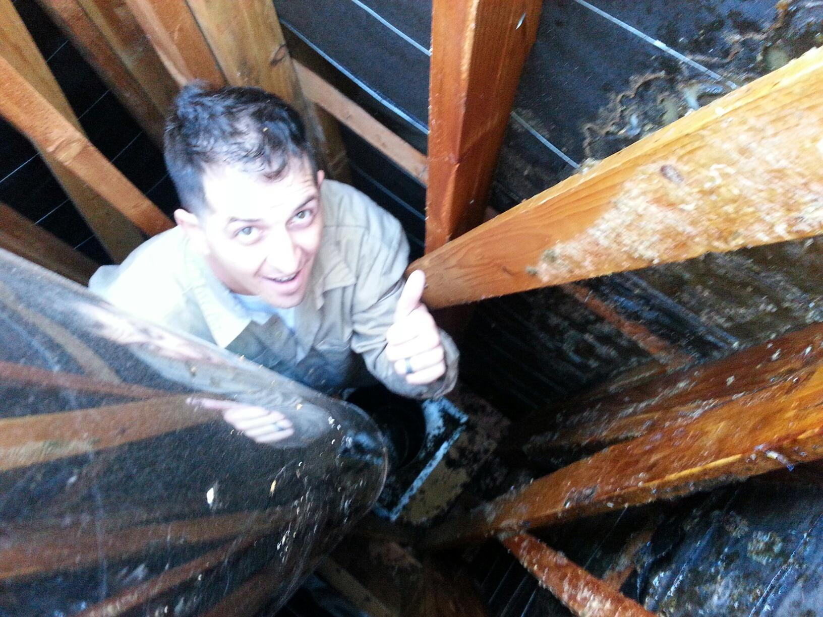 chimney bees in orange county call bee busters