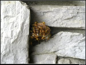 Place for a Wasp Nest - Anaheim wasp nest removal
