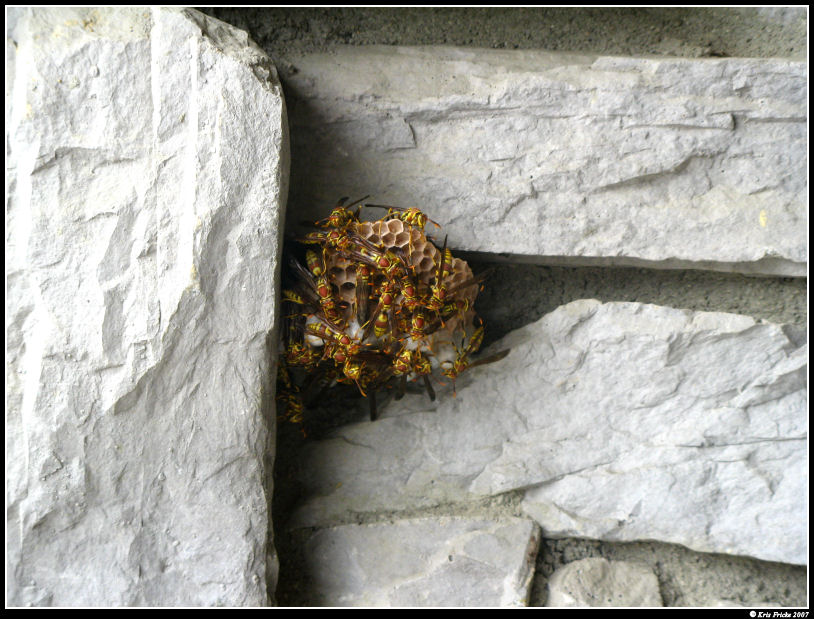 Place for a Wasp Nest