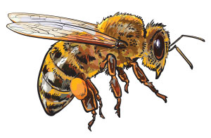 Bee Removal Service - Info About Bees
