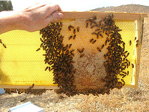 Orange County beekeeping expert