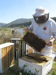 Southern California Bee Removal and Beekeeping