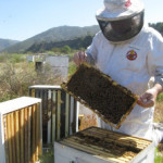 Southern California bee control team