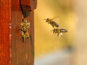 Orange County Beekeepers - Strange Places for Beehives - Remove term: Bee Removal Fullerton Bee Removal Fullerton