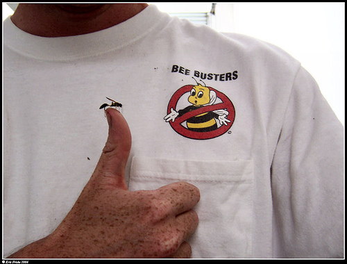 Bee Busters - Irvine wasp nest removal