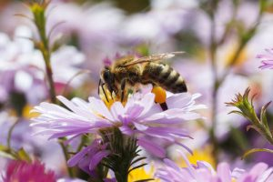 bee on a flower - bee removal Lake Forest