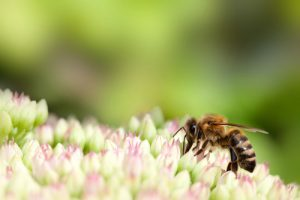 Bee on a flower - Beehive removal cost in Garden Grove